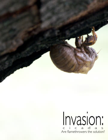 submission for the 1.618 Weekly - invasion: cicadas