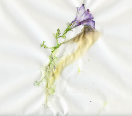 purple flower for 1.618